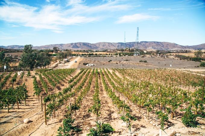 Clos de Tres Vineyard