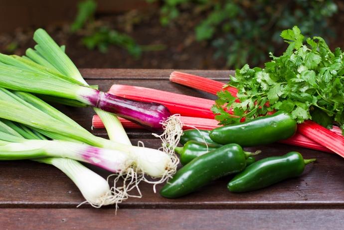 Spring Onion, Rhubarb, Jalapeno, Cilantro