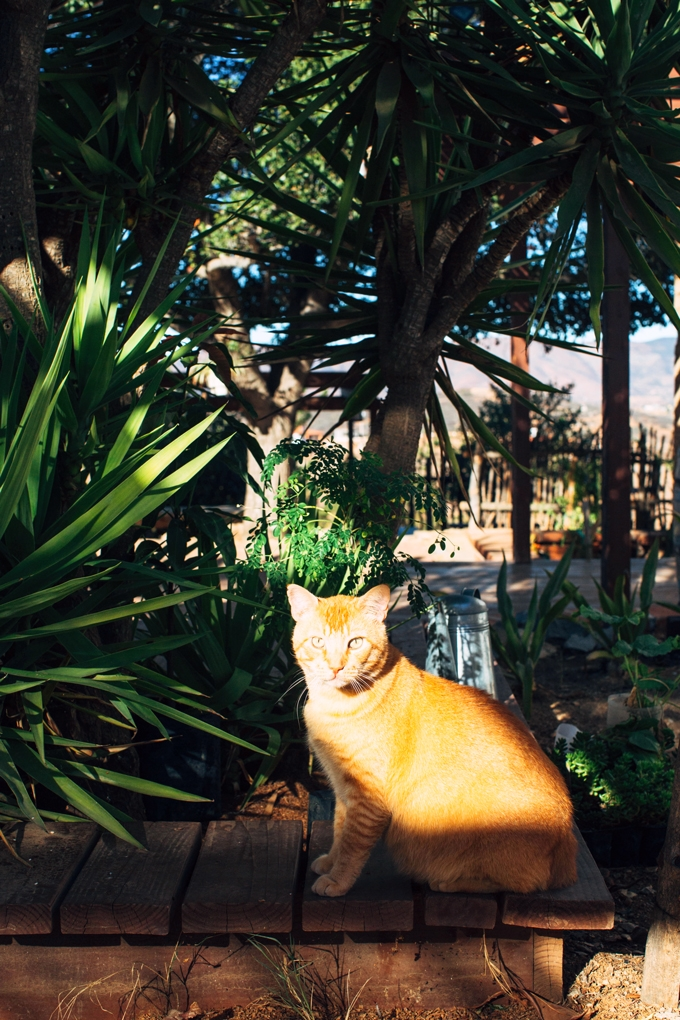 Casa Mayoral Cat