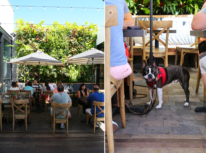 The Patio Dog Friendly
