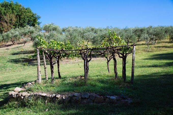 Leonardo Da Vinci's Vineyard