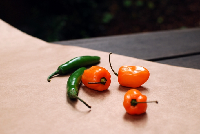 Habanero and Serrano Chilis