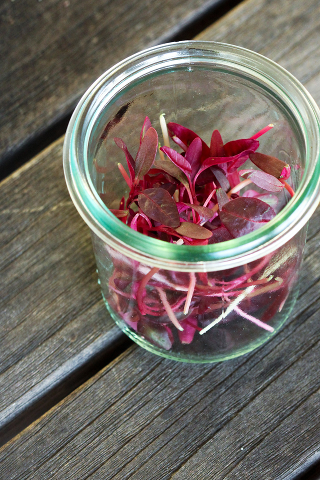 Red Micro Greens