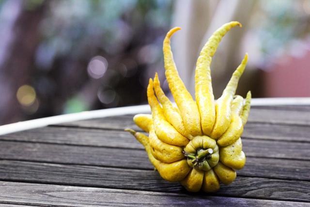 Buddha Hand Citron