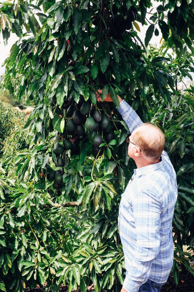 California Avocado Grove Tour